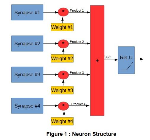 ニューロン構造の図